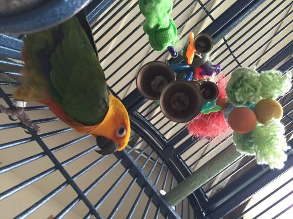 Parow Parrots For Sale Western Cape Classifieds Ads, Parow Parrots